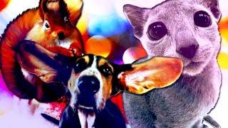Смешное видео: как животные дружат с подарками