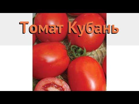 Вопрос: Почему помидоры в Кубани выращивают в открытом грунте?