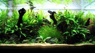 Freshwater Planted Aquarium - Little Pixie | 小精灵