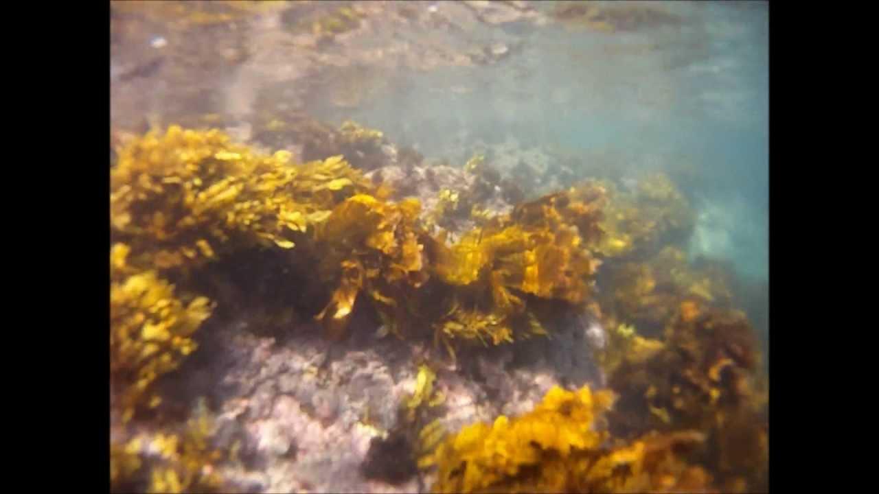 Bushrangers Bay Snorkelling - YouTube