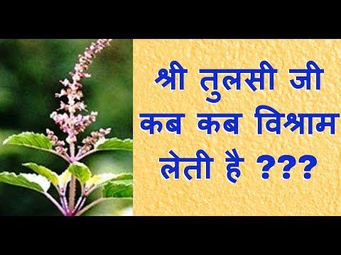 Video - https://youtu.be/_IyUiWTL0a0          श्री तुलसी जी कब कब विश्राम लेती है ।। अवश्य सुने ।।                www.hasanandgocharbhoomi.com     श्री मदन मोहन मालवीय जी द्वारा स्थापित गौशाला ।।