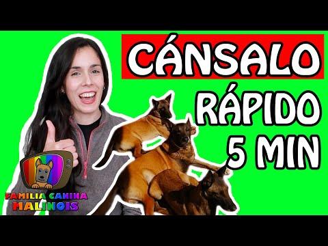 3 MANERAS de CANSAR a tu PERRO en CASA | Adiestramiento Canino