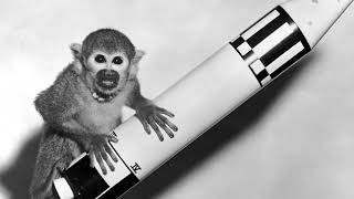 Animals in space | Wikipedia audio article