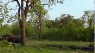Дикая Южная Африка. Сафари / Wildlife South Africa: Safar (Doku) / Видео