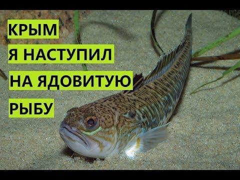 Крым. Наступил на пляже на ядовитого дракона. Что срочно надо сделать. thumbnail
