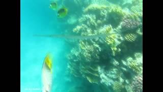 видео снятое под водой на Canon PowerShot A590 IS(качество видеосъемки Canon PowerShot A590 IS под водой., 2013-02-15T21:45:55.000Z)