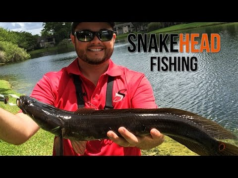 Searching for Invasive Snakehead Fish - Explosive Strikes!