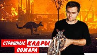 Пожары Австралии: Редкие Ужасающие Кадры//ПАРАЗОМБ #8