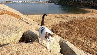 防波堤を歩いていたら野良猫が駆け寄って来た