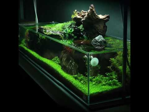 Nice Simplicity Aquascape Preview #2 (full Video Coming Soon!)