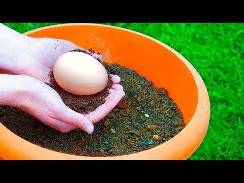 plante-un-Œuf-dans-ton-jardin,-et-découvre-ce-qu'il-va-se-passer