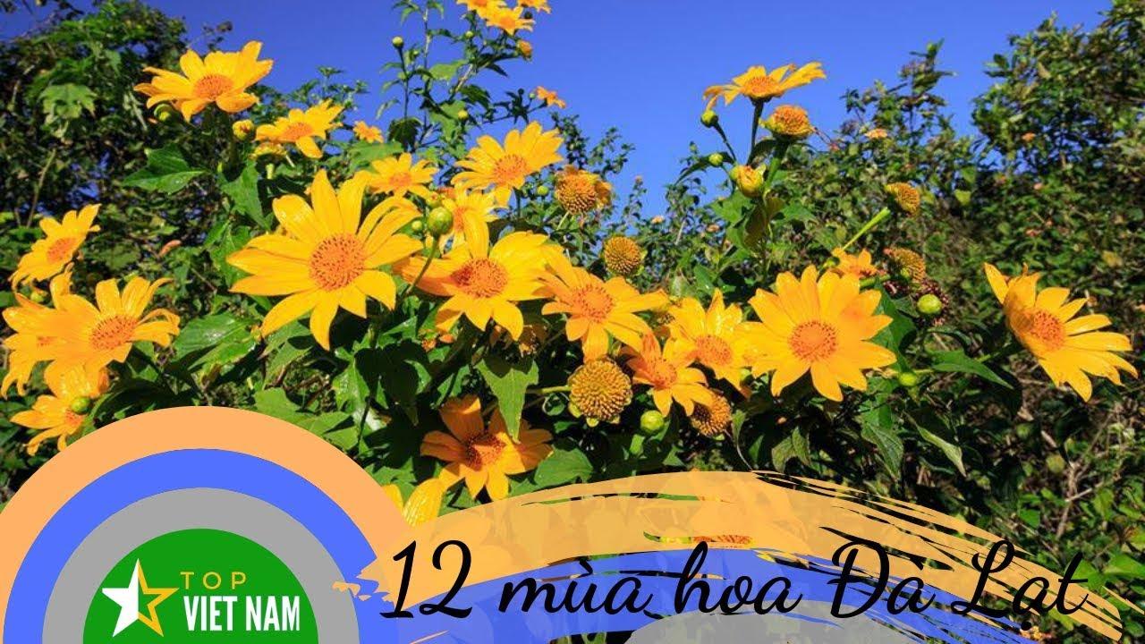 12 Mùa Hoa Nở Đẹp Nhất Ở Đà Lạt