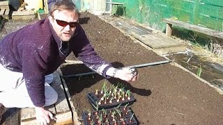 Allotment Diary : Planting Onions & Sowing the polytunnel Gutter Peas