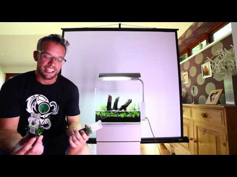 How to aquascape a nano tank with Dennerle plants