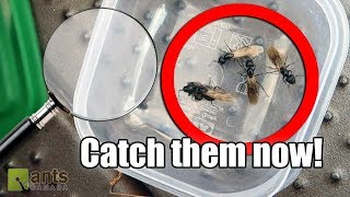Click here to SUBSCRIBE: https://goo.gl/tlCQJZ Check out & subscribe to my NEW DAILY VLOGS: https://goo.gl/GCx1Jq Catch a queen ant now! For today's Ant ...