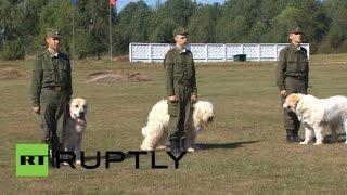 Открытая тренировка питомцев центра служебного собаководства