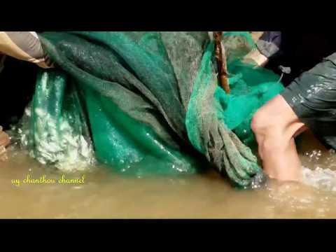 Great Net Fishing In Cambodia - catch fish using cast nets - cast net fishing video