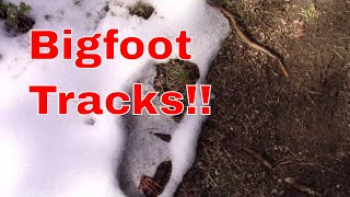 Bigfoot Tracks!