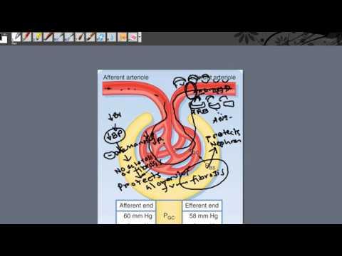Angiotensin Receptor Blocker part 2  Diabetic Nephropathy