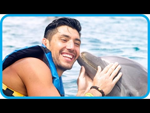 yomuscleboii-swimming-with-dolphins-in-mexico---royal-caribbean-adventure