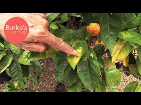 Burke's Backyard, Heat Damaged Plants