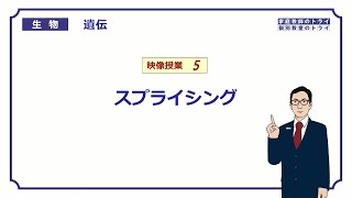 【高校生物】 遺伝5 スプライシング(12分)