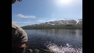 Nice brown trout in the Norwegian mountains in the middle of May.