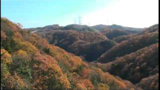 大阪交野・紅葉2010 ~晩秋の星のブランコを歩く~