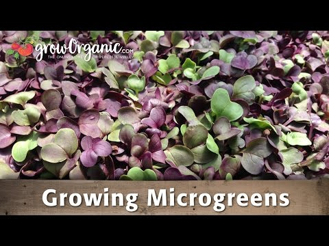 Grow Your Own Delicious, Healthy, Microgreens