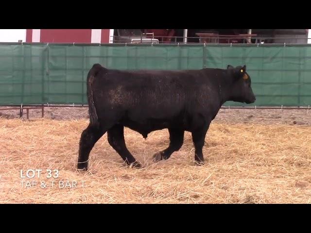 Taliaferro Angus \u0026 T Bar T Angus Ranch - 33