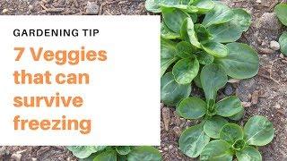 7 Vegetables that cąn survive freezing