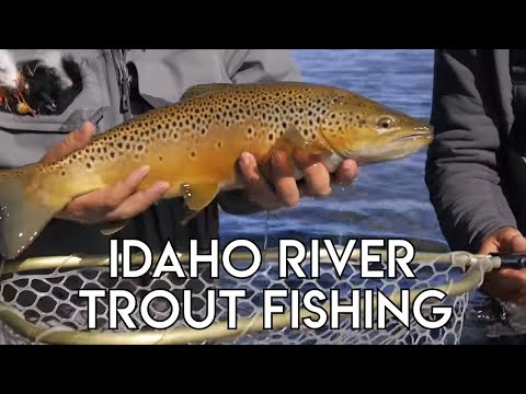 Idaho River Trout Fishing