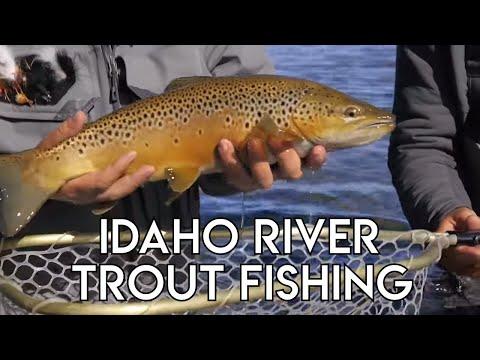 Idaho River Trout Fishing