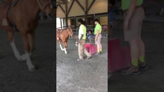 Turtle back Zoo Pony ride