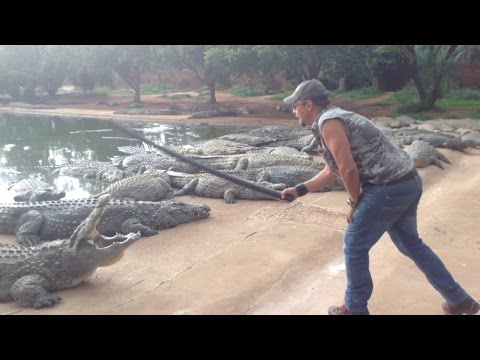 14000 Nile Crocodiles On One Farm ( Croc Capture )