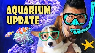 new saltwater reef aquarium haul   crazy spending spree life after college ep 467