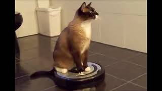 Кот и робот пылесос