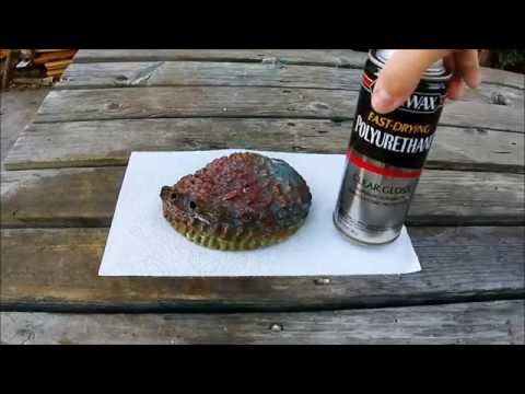 How To Clean Abalone Shells