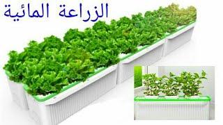 فكرة عمل نظام زراعة مائية الصندوق العائم بمبلغ بسيط