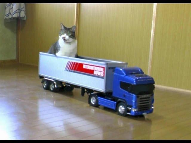 タミヤのスカニアに猫が乗ってきた The cat came riding in the TAMIYA SCANIA