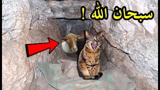 وضعوا كاميرا مراقبة لـ القطط يوم عيد الاضحى المبارك بعد يوم عرفة .. شاهد المفاجأة سبحان الله !!!