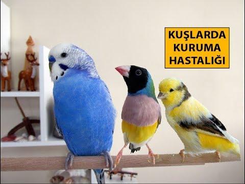 Kuşlarda Kuruma Hastalığı Ve Belirtileri