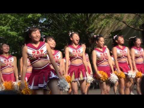 早稲田大学オープンキャンパス2017 8/6 チアリーダーによる華麗な応援!