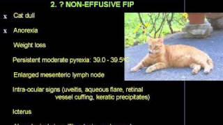 Does Pancho have non-effusive Feline Infectious Peritonitis (FIP)?