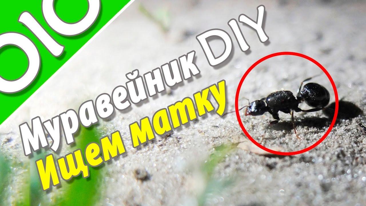 Из чего сделать муравейник своими руками