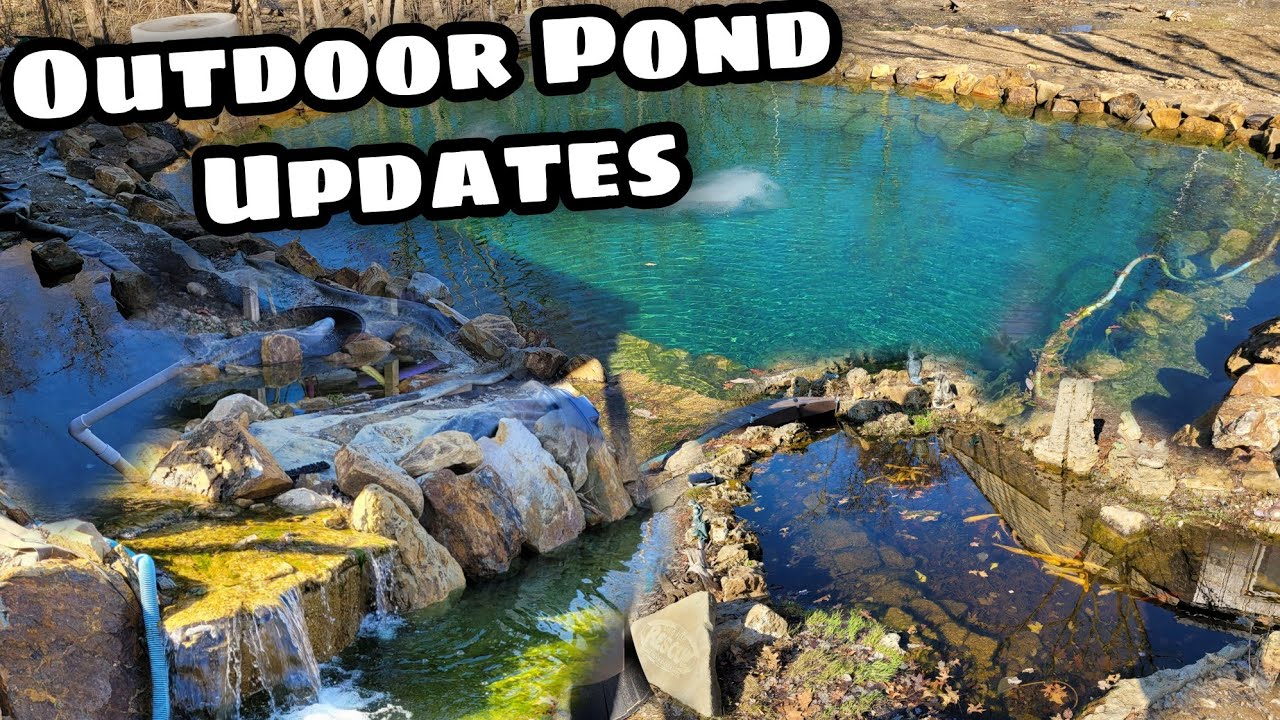 Spring Update on 35,000 gal Koi Pond and other outdoor Ponds