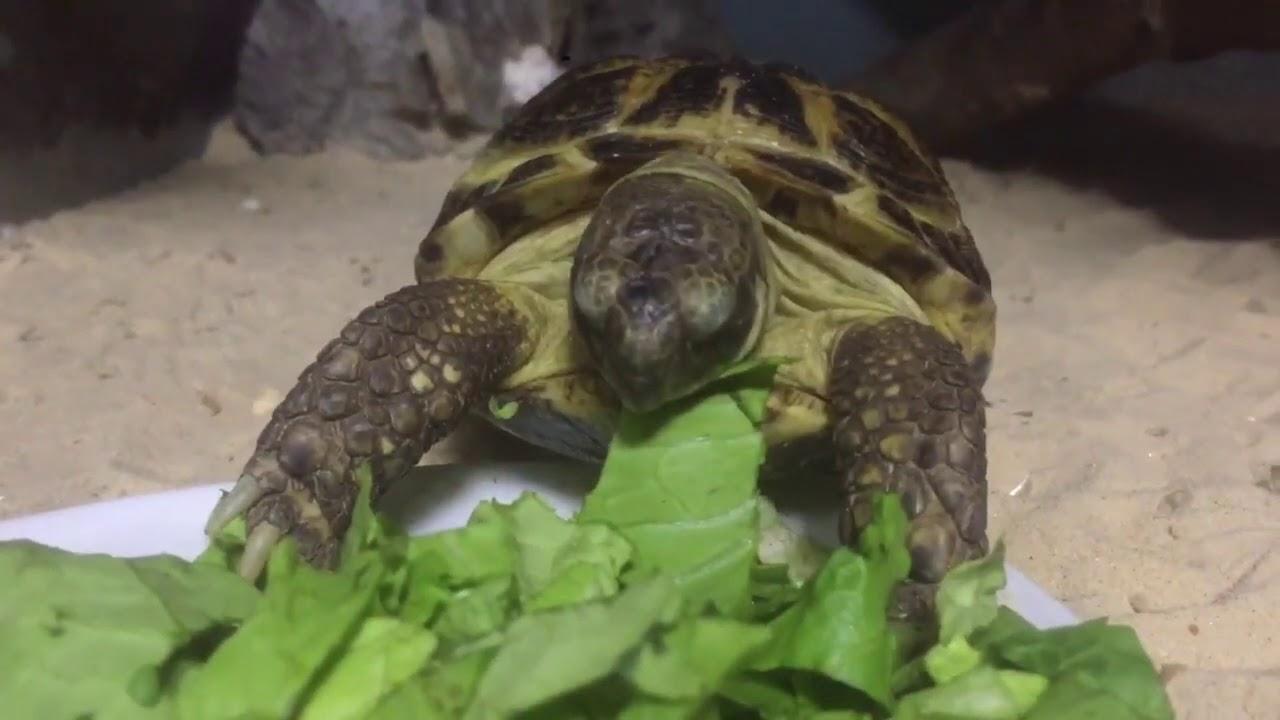 А вы видели, как кушает черепаха? Сказка