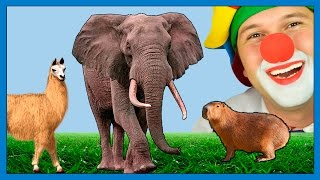 Learn Animals for Kids - Educational ZOO Learning Video w/Funny Clown Elephant Lama Crowned Crane