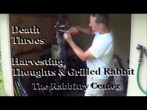Harvesting Thoughts, Death Throes & Grilled Rabbit 5:13