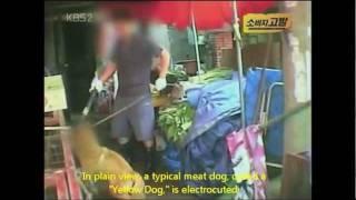 Korean Dog Meat - Former Pets 3
